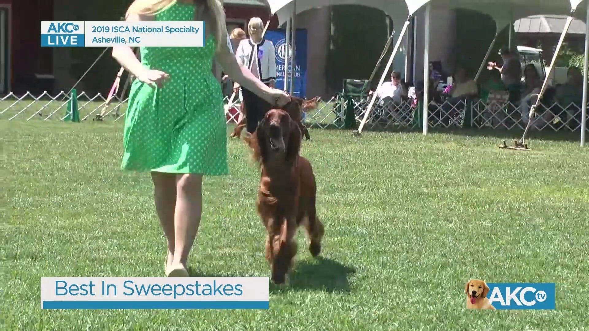 AKC TV : Best in Sweepstakes